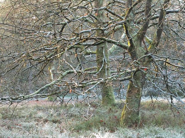 frosty rime