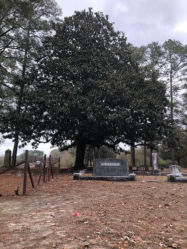 magnolia cemetery tree tombstone