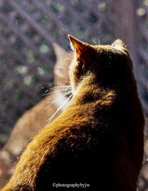 Priscilla's  Reflection Happy Caturday