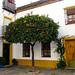 Plazuela con naranjo en San Basilio.