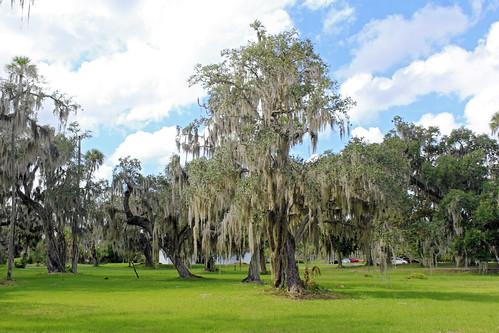 park trees landscape florida spanishmoss crystalriver