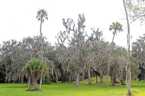 park trees landscape scenery florida palmtrees crystalriver