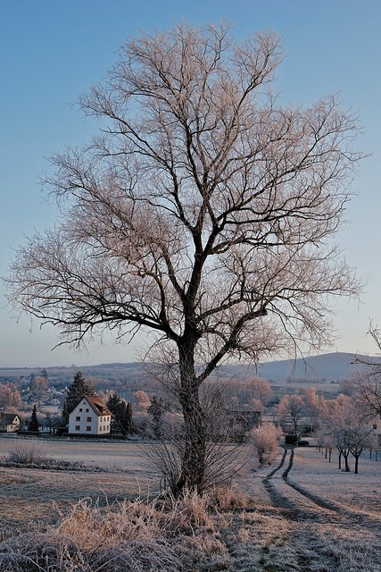 Guten Morgen Baum