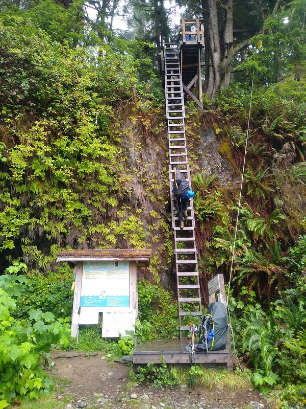 The final ladder on the West Coast Trail at Gordon River was also the steepest; it was almost straight down
