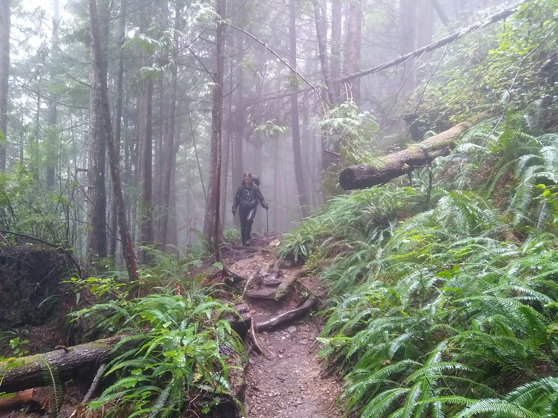 Vicki hiking through a misty forest on the West Coast Trail near Port Renfrew after the rain finally let up