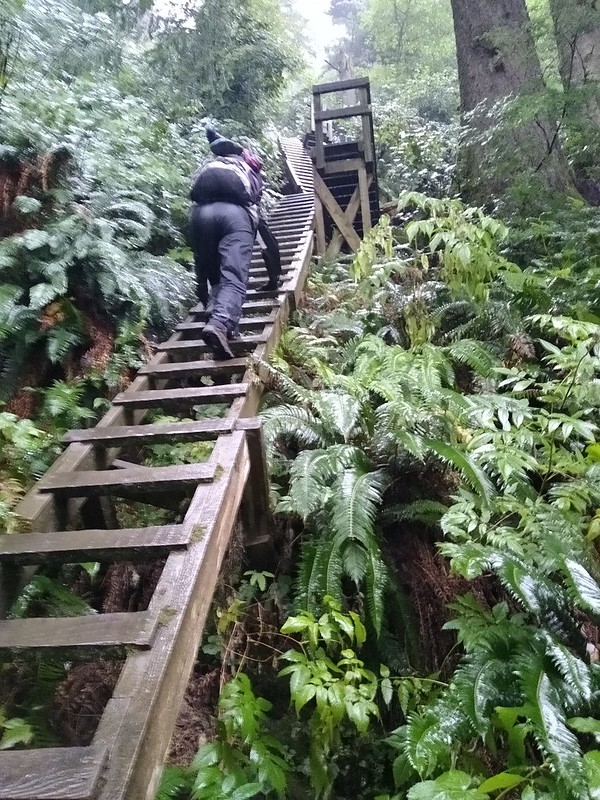 There are a LOT of steep ladders on the trail out of Thrasher Cove on the West Coast Trail
