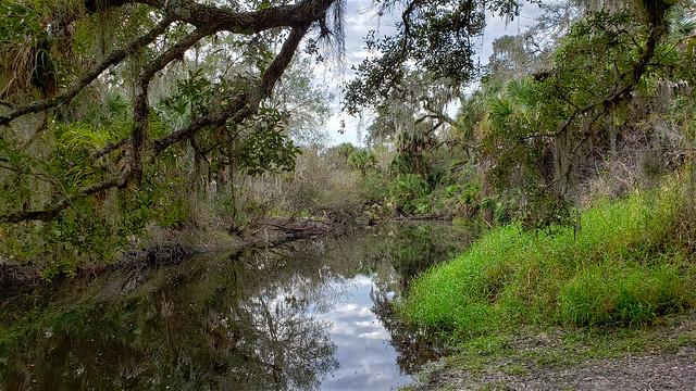 Clay Gully, Myakka River State Park, Sarasota, Florida, USA