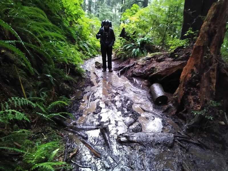 The West Coast Trail above Thrasher Cove looks a lot wetter and muddier when its raining