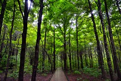If One Has Loneliness, One Can Find Company Amongst the Trees (Mammoth Cave National Park