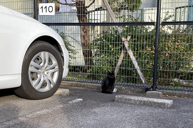 Today's Cat@2020-01-04