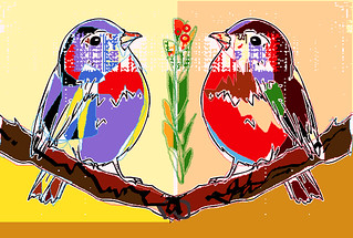 birds couple 2020