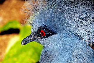 A tropical bird