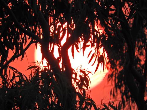 sydney sunset australia heatwave hot