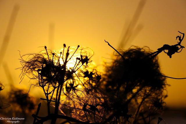 Sonnenaufgang / Sunset