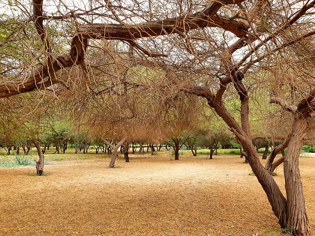 Winter Started  #withgalaxy #samsung #yanbu #samsungmobile #s10e #trees #leaves #winter #park