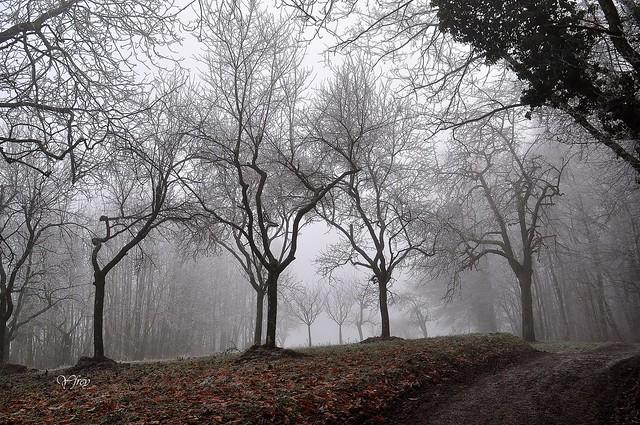 Squelettes dans le brouillard givrant
