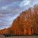 Wall Wood, January Afternoon