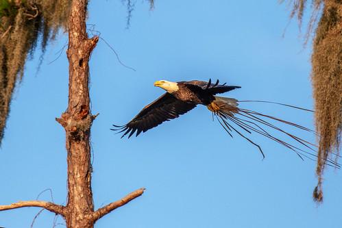 outdoor dennis adair sky nature wildlife 7dm2 7d ii ef100400mm ocean canon florida bird
