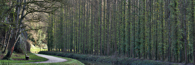 Tree curtain / Rideau !