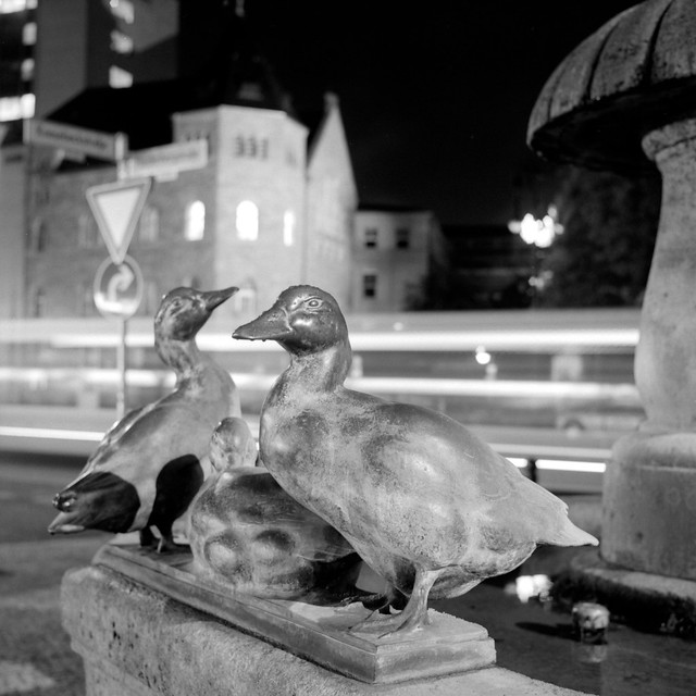 Brass Ducks waiting for some Water