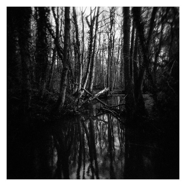 FILM - Dreaming of the bayou