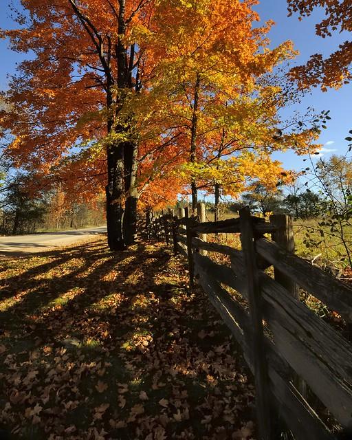 Autumn shadows, Caledon, Ontario..