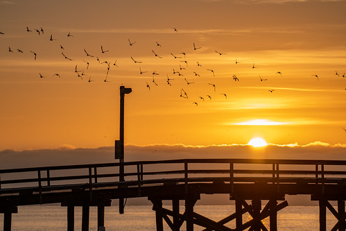 goleta sunrise bird birds pier dock goletabeach santabarbarachannel twilight morning sky skies cloud clouds beach seashore beachside seaside santabarbara