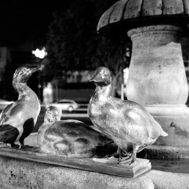 Brass Ducks in the Dark