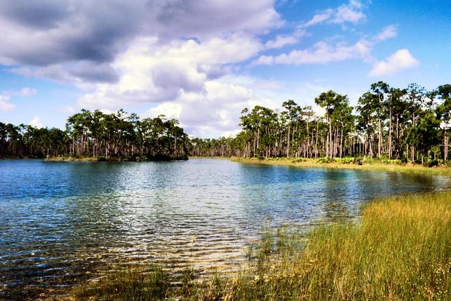 Long Pine Key, Florida Everglades on Kodak E100 slide film