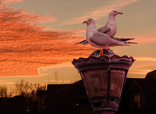 Two Gulls At Sunset