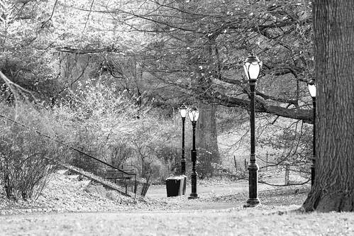 newyork newyorkcity manhattan centralpark autunm november trees lamps streetlamps sidewalk path treetrunk park grayscale bw blackandwhite monochrome