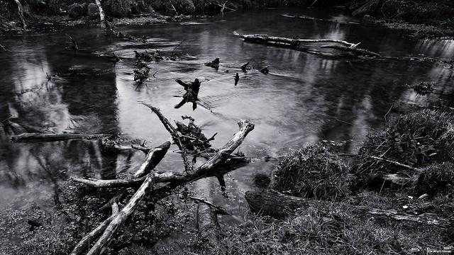 Bois flotté mort de rivière