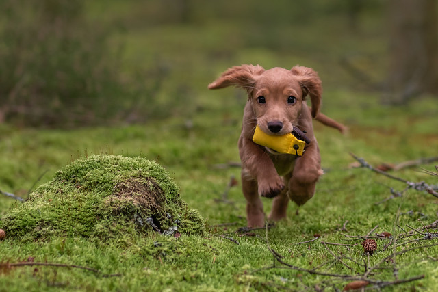 Run for training