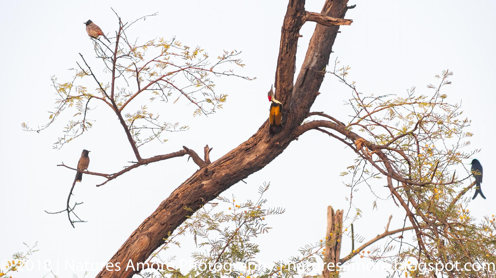 Bharatpur Bird Sanctuary-93