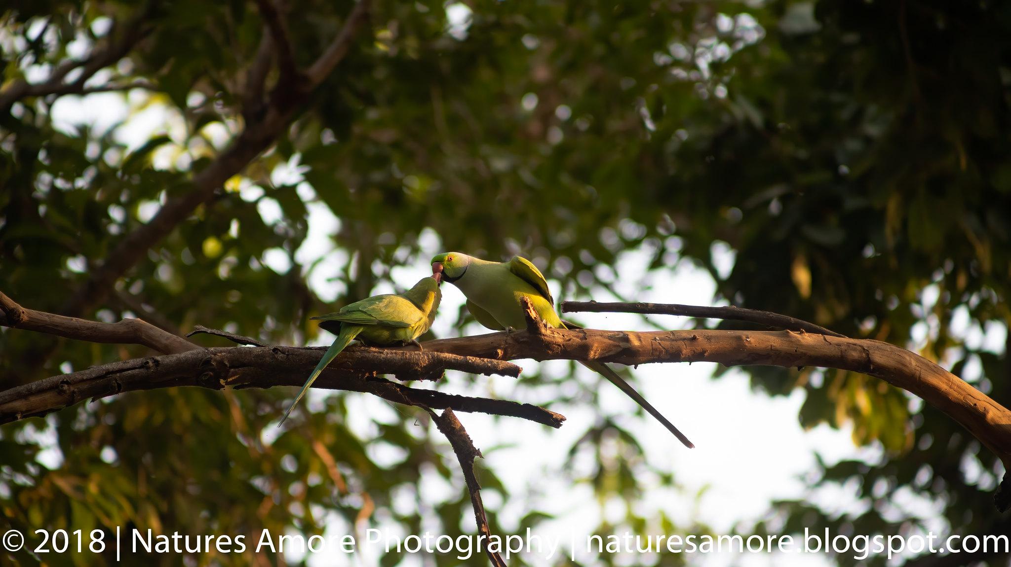 Bharatpur Bird Sanctuary-83