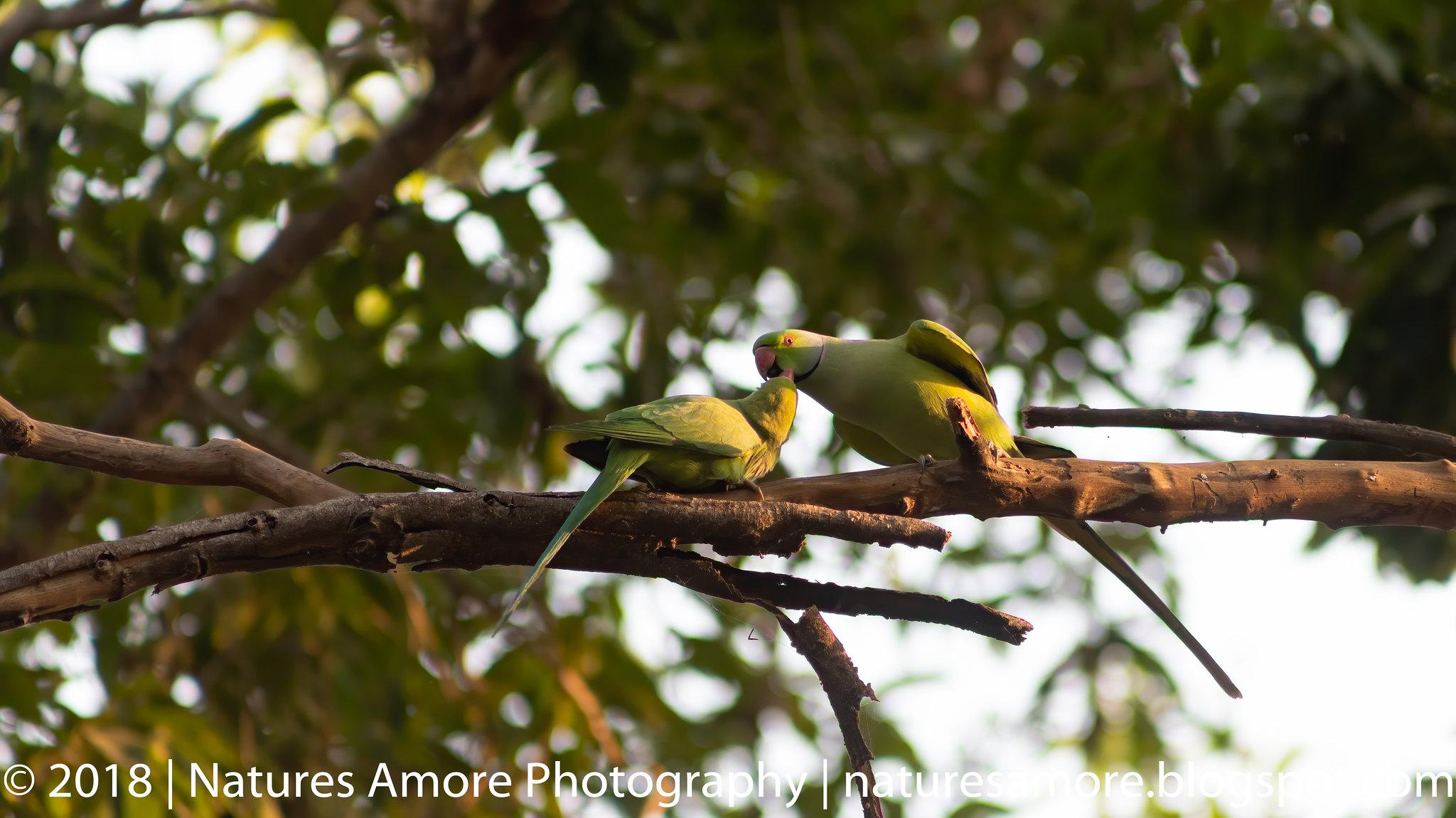 Bharatpur Bird Sanctuary-82
