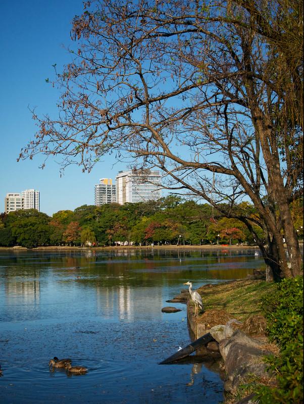 155-Japan-Fukuoka