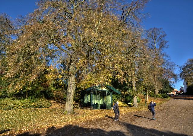 Autumn trees at Avenham Park, Preston