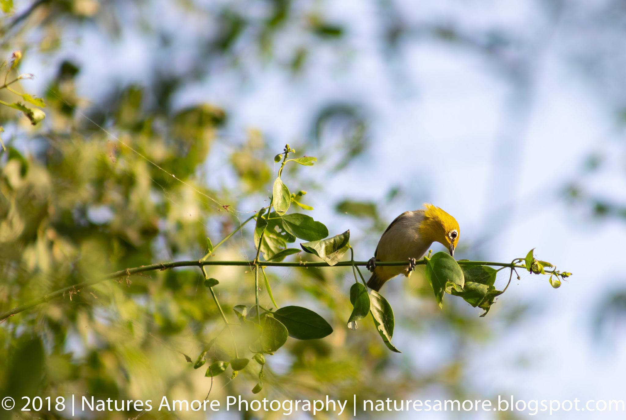Bharatpur Bird Sanctuary-75