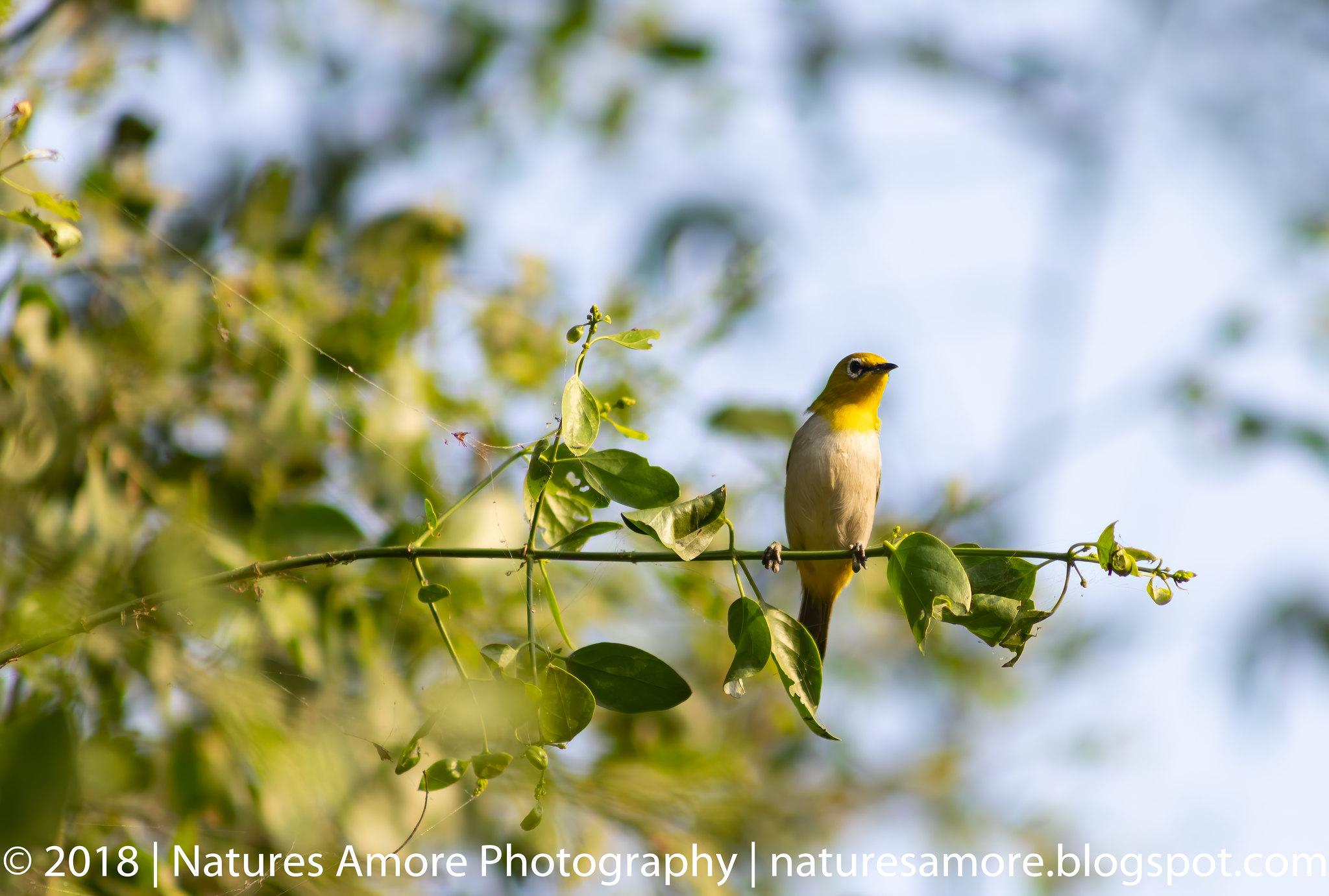 Bharatpur Bird Sanctuary-74