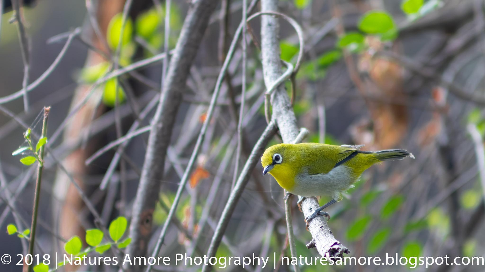 Bharatpur Bird Sanctuary-72