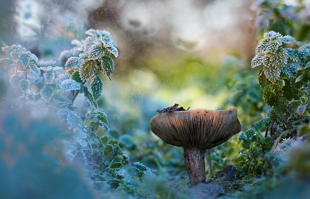 Fairy tale(1)