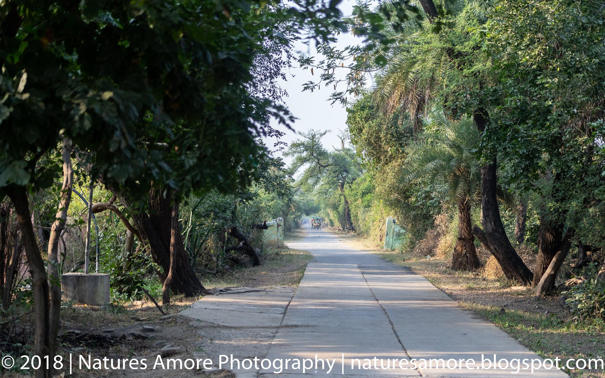 Bharatpur Bird Sanctuary-70