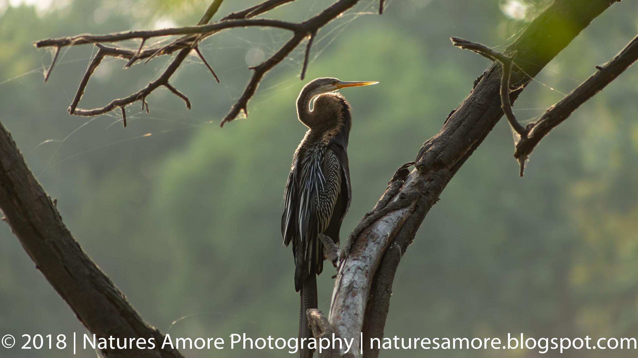 Bharatpur Bird Sanctuary-68