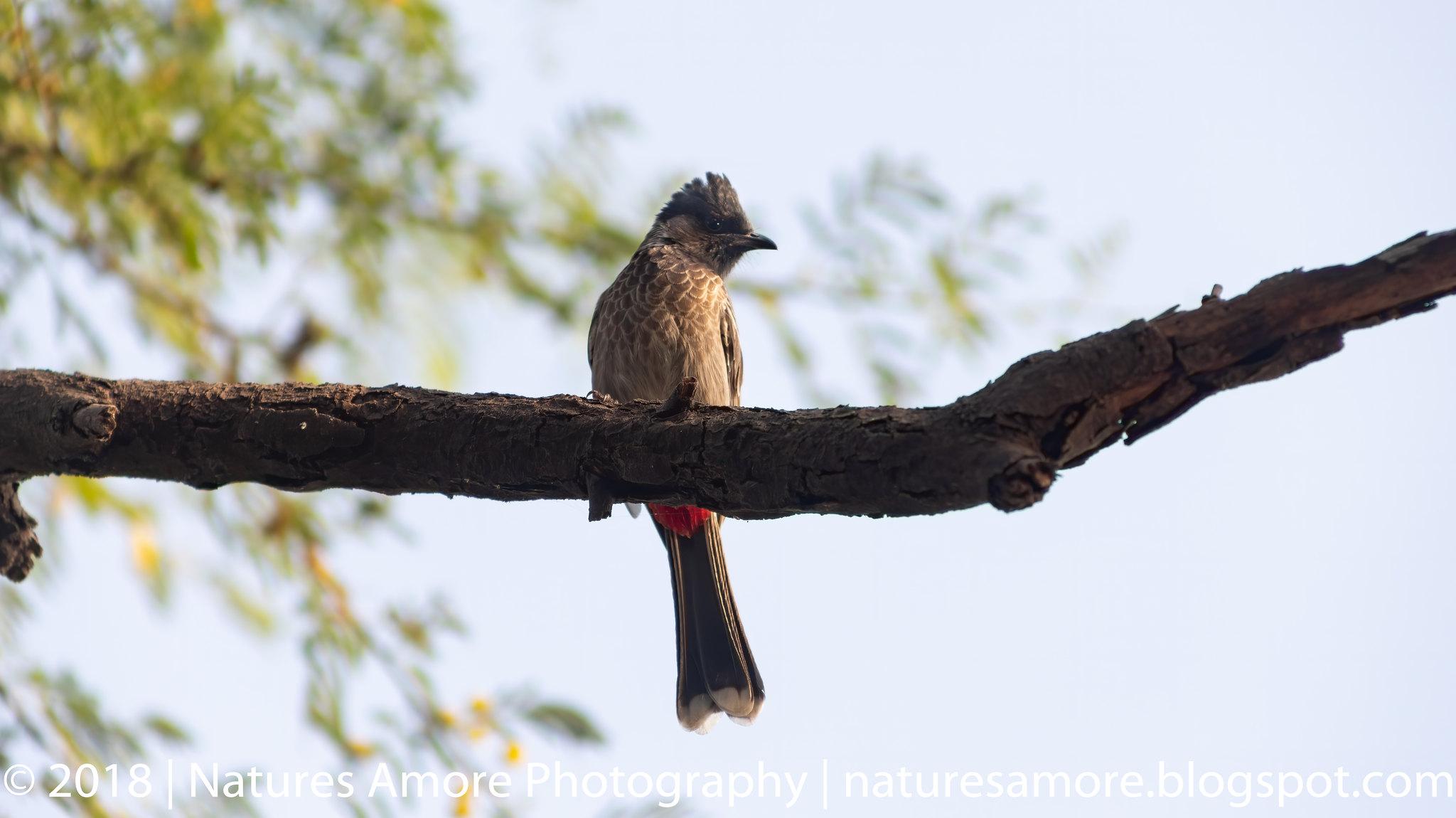 Bharatpur Bird Sanctuary-67