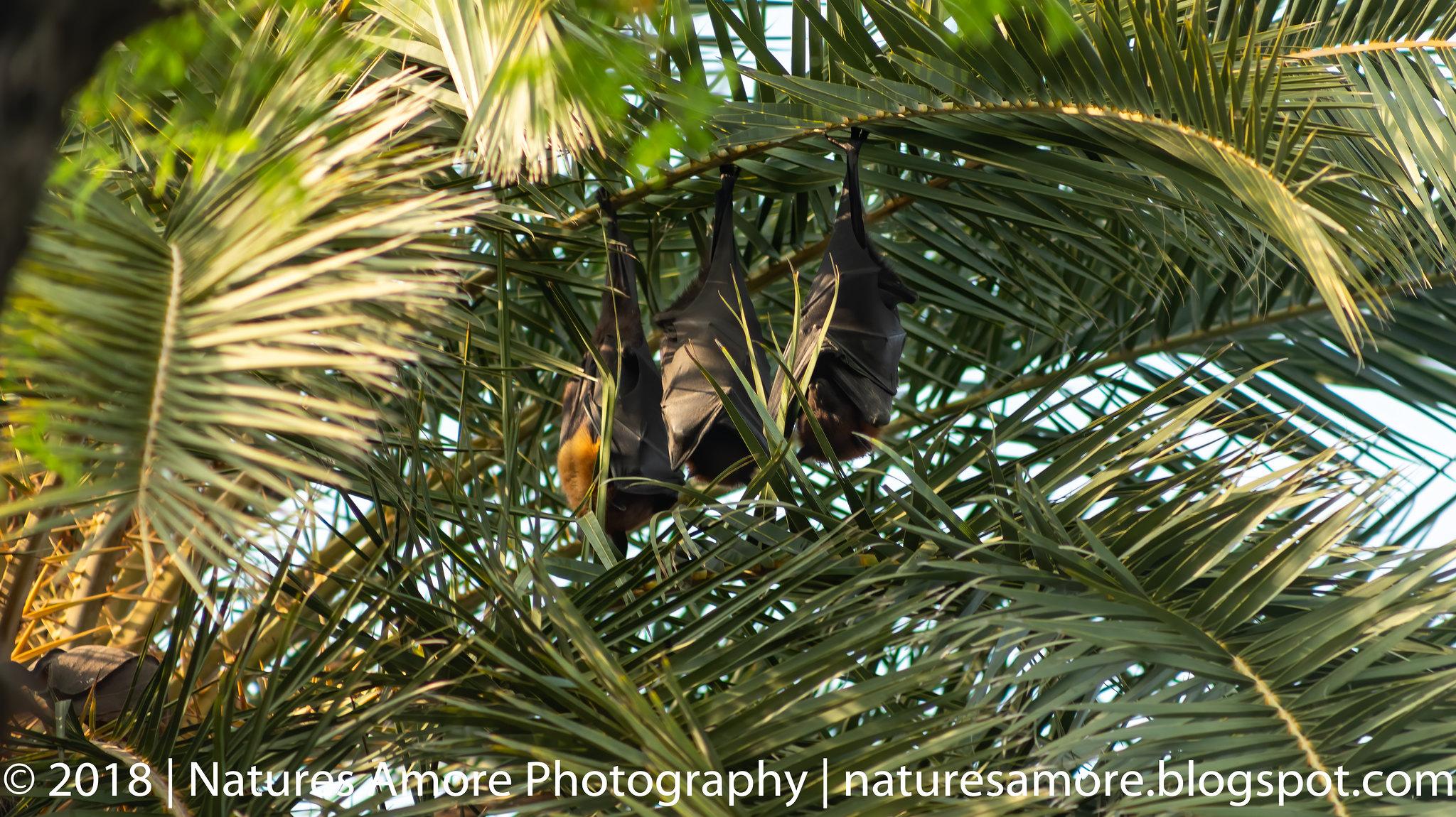 Bharatpur Bird Sanctuary-66