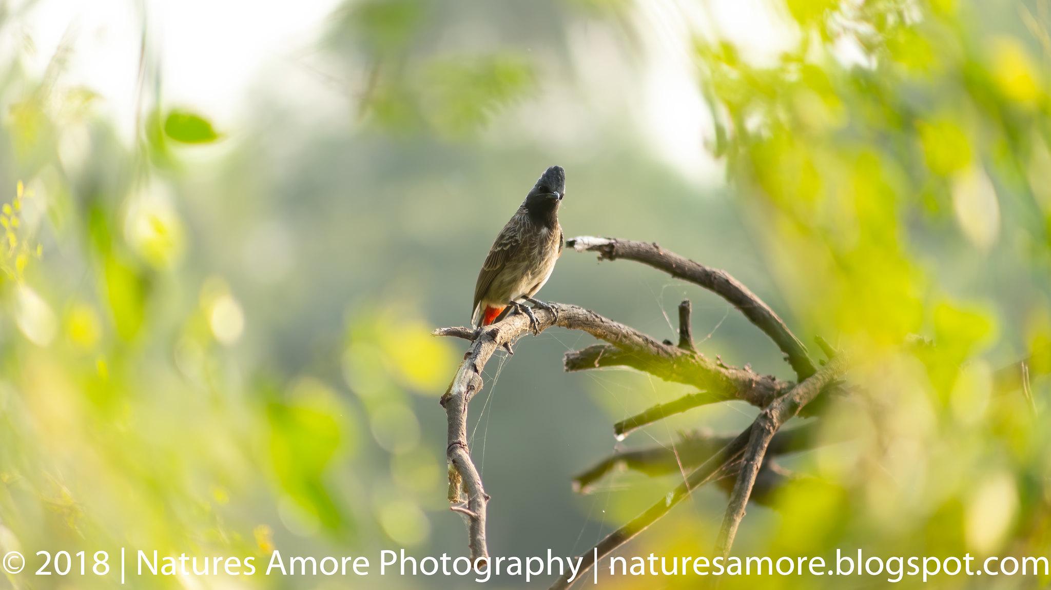 Bharatpur Bird Sanctuary-56