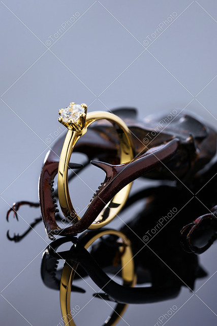 Gold wedding ring with diamond in stag beetle claws on black background