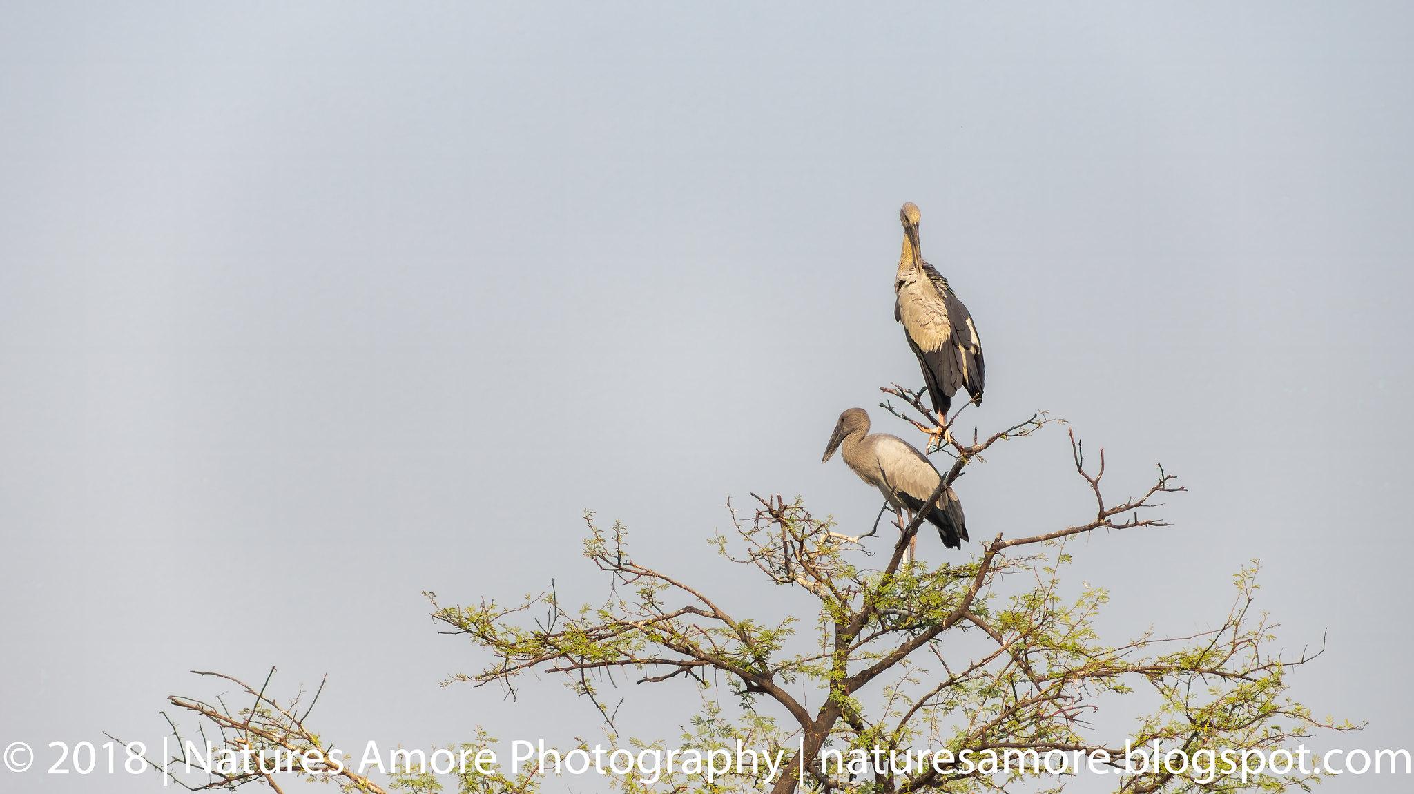 Bharatpur Bird Sanctuary-52