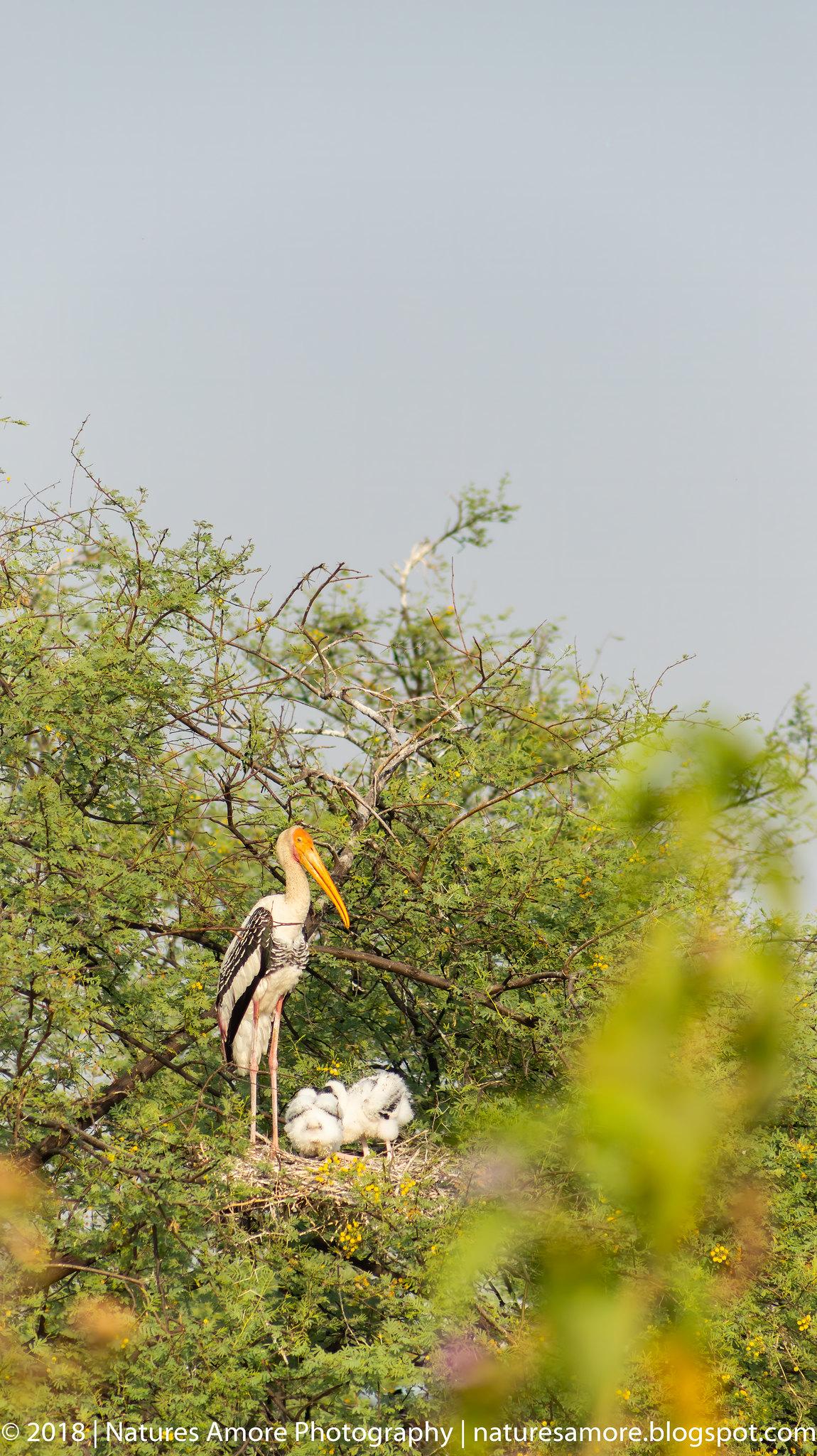 Bharatpur Bird Sanctuary-50